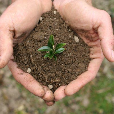 Hands-holding-soil